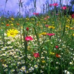 weedsflowers.php